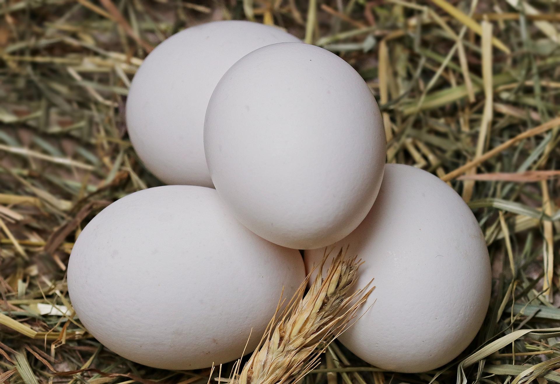Couveuse automatique à œufs - Les meilleurs incubateurs d'œufs à acheter en 2021