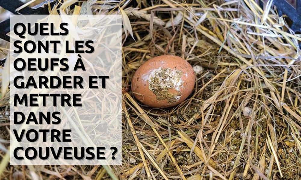 Quels œufs garder et jeter avant de les mettre dans la couveuse automatique ?