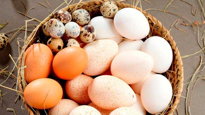 Les différents types d'œufs qui peuvent être incubés dans une couveuse automatique ?
